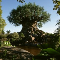 Tree of Life, walt disney world
