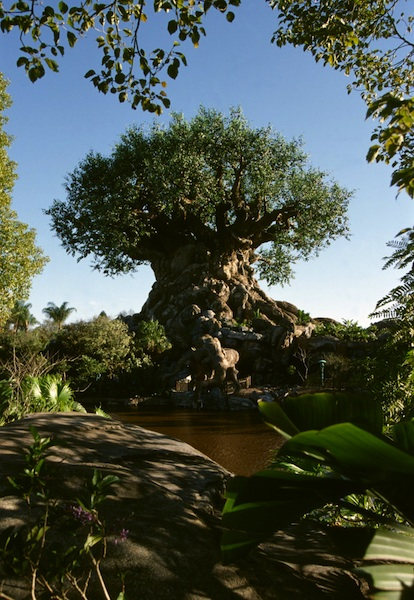 Tree of Life © Walt Disney Company