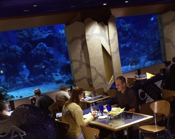 Coral Reef Restaurant © The Walt Disney Company