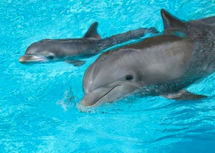 Baby Dolphin at Discovery Cove ©Discovery Cove/SeaWorld