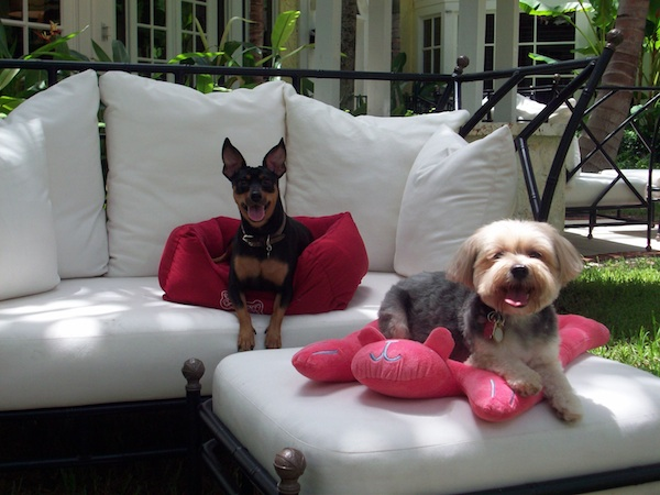 Chloe and Brownie in lounge chair ©Brazilian Court Hotel & Beach Club