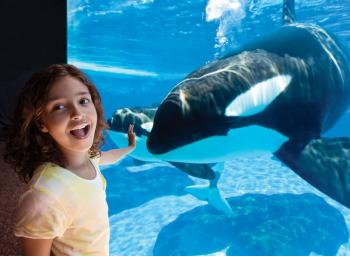 Fun at SeaWorld ©SeaWorld