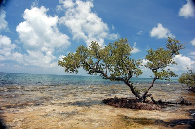 Bahia Honda © Florida Department of Environmental Protection