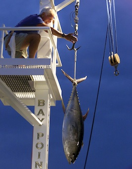 Sport Fishing © Panama City Beach CVB
