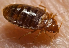 Travel Tip: Don't let the bed bugs bite