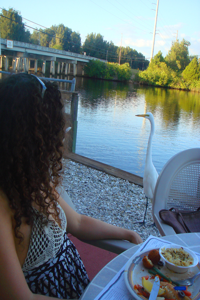 Dining with an Egret at Myakka River Oyster Bar &#169 Holiday Tripper