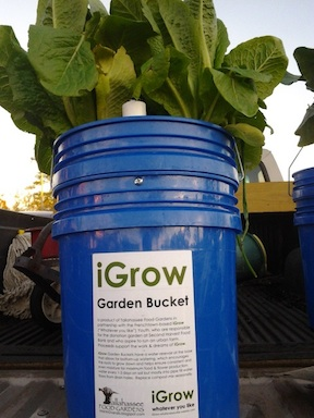 The iGrow Bucket @ iGrow Gardens