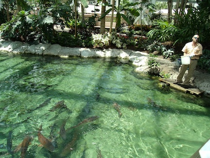 Fish feeding at The Gaylord Palms (credit: HolidayTripper.com)