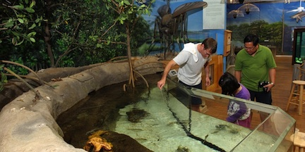 Touch tank (credit: Volusia Marine Science Center)