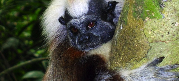 Tamarin Day (credit: The Walt Disney Company)
