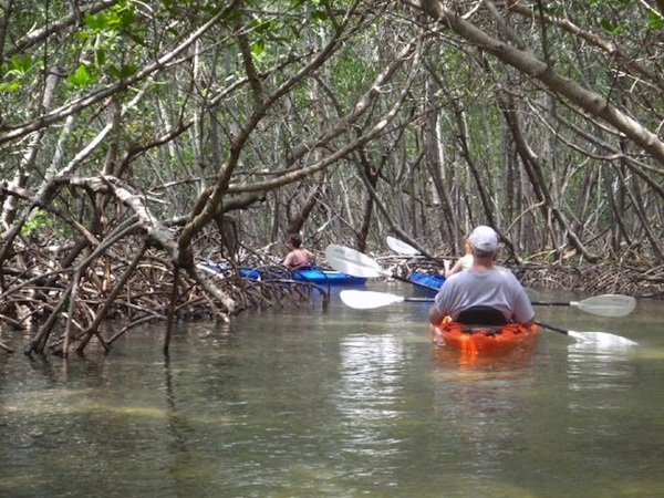 Mangrove Tunnel Kayak Tour (credit: Almost Heaven Kayak Adventures)